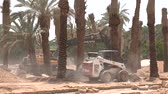 Palm Plantation at Ad Dareyah Historical Town in Riyadh