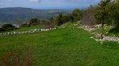 Pasture for animals in the mountains. Flowers and plants in Montenegro.