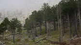 Thick fog in the forest and in the mountains in the village of Njegusi, on Mount Lovcen in Montenegro.