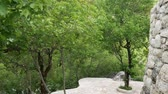 tranquility : Forest in Montenegro. Texture tree. Forest in the summer. Stock Footage