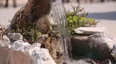 vaso : The old fountain. Architecture of Croatia and Montenegro, Balkans. Stock Footage