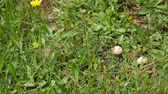 funda : Mushrooms in the forest mushrooms in the grass.