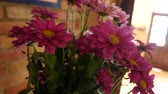 krizantem : Bouquet Astra in a vase in the room. Flora of Montenegro. Stok Video