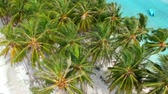 turkus : Coconut palms from the beach with sand and small boats on turquoise ocean Wideo