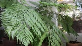 Fern leaves in outdoors garden, stock footage Vídeos
