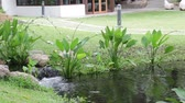 Plants and stream in tropical resort, stock footage Vídeos