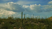 Cactus Garden - A motion control time lapse in Saguaro National Park.