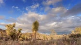 Joshua Tree Desert - Sun sets as clouds roll over Joshua Tree National Park. Stock Footage