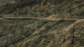 Drought Stricken Terrain - Death and decay on a drought stricken terrain in southern California.