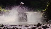 lovaglás : Enduro Motocycle Rider Crosses Mountain River Splashes of Water and Dirt. Slow Motion. Stock mozgókép
