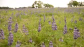 in full bloom : California Wild Flowers Focus Shift