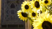 girassol : Sunflower and Stained Glass