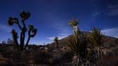 estrelado : Joshua Tree and Yucca Night Time Lapse Pan