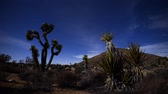 estrelado : Joshua Tree and Yucca Night Time Lapse