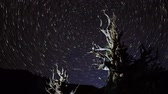 perseids : Astrophotography Time Lapse of Star Trails over Ancient Bristlecone Tilt Up