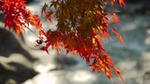 сентиментальный : Japanese Maple Trees over River in Autumn in Japan