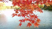 сентиментальный : Japanese Maple Trees over Pond in Autumn in Japan