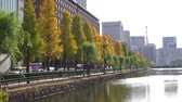 honra : Yellow Ginkgo Tree by the Imperial Creek in Japan Time Lapse Vídeos