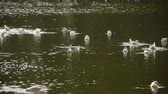 релаксация : Seagulls Playing in the Imperial Creek of Japan
