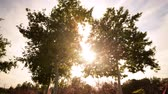 Time lapse footage with tilt up motion of the sun behind two tall trees at a park