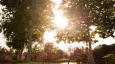 Time lapse footage with pan left motion of the sun behind two tall trees at a park