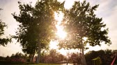 Time lapse footage with motion of the sun behind two tall trees at a park