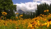 çayır : Half Dome over carpet of yellow flowers at a meadow in Yosemite National Park, California -Tracking In-
