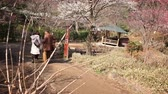relaxation : ATAMI, SHIZUOKA -February 18th, 2015: Motion controlled tilt uppan right time lapse footage with rotating motion of Japanese plum trees in full bloom at Atami Botanical Garden in Atami, Shizuoka