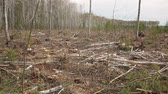 verdejante : deforestation, lifeless part of the forest ecology Vídeos