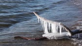hajlik : Icicles on a log are washed by waves in a freezing pond, Ob reservoir, Siberia, Russia