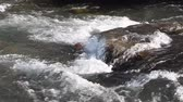 akım : Water flowing on the stony course, Ursul River, Altai, Russia Stok Video