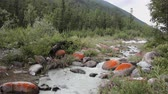 river bed : Rushing Akkem River in the morning among Altai Mountains, Russia
