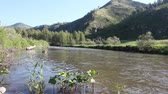 riverbank : Mountain Anuy River, Altai, Russia Stock Footage