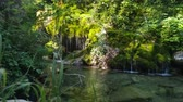 印象的な : Small lake with a waterfall in a forest. Beautiful tourist place on south Italy. 動画素材