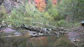 осень : Meandering Stream and Beaver Dam in Fall