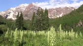 beauty in nature : Maroon Bells Aspen Colorado in Summer