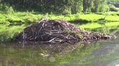 natuur : Beaver House in Lake
