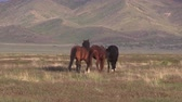 пустыня : Wild Horses in the Utah Desert in Summer