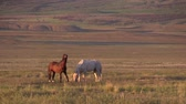 западный : Wild Horses in the Utah Desert