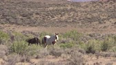 laver : Wild Horses in the High Desert