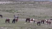 a natureza : Wild Horse Herd in Utah