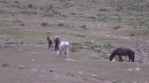 Herd of Wild Horses in Spring in Utah