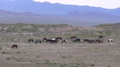 ユタ州 : Herd of Wild Horses in the Utah Desert
