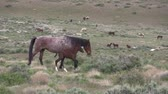 konie : Wild Horses in the Utah Desert