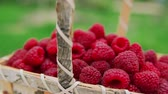 framboesa : Panorama of ripe red raspberries in the wicker basket in slow motion