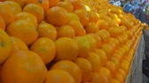 мандарин : Juicy ripe mandarines on beautifully decomposed showcase in the fruit market