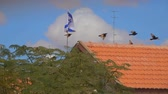 csillag : Birds fly across the sky against the background of the flag of Israel