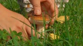 fungos : Picking mushrooms in the Forest Glade with a beautiful basket Stock Footage