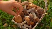 houby : Female hand puts mushrooms in a beautiful basket