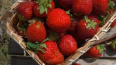 jam : Basket with ripe strawberries stands on a wooden table. .View from above, camera movement